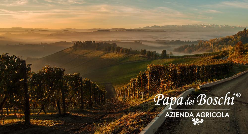 I.G.P. Piedmont Hazelnut Papa dei Boschi, excellence for your ice cream parlour.